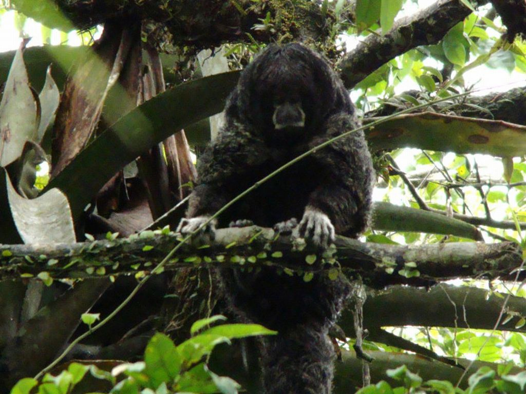 Wooler monkey Amazon tour